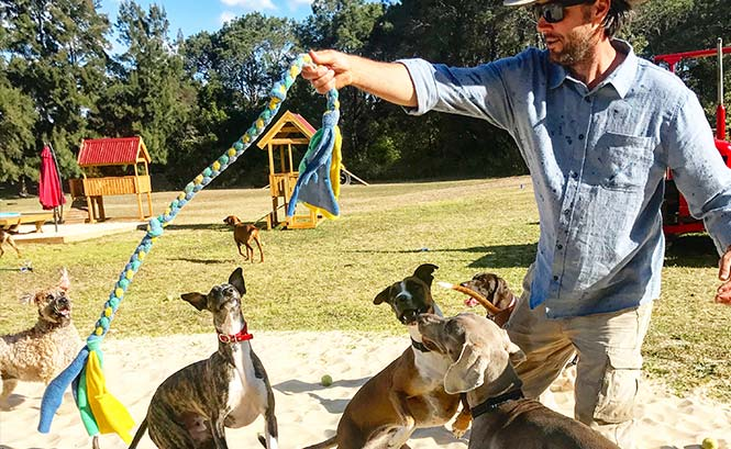 100% supervised play all day long soevery dog is happy – big or small!