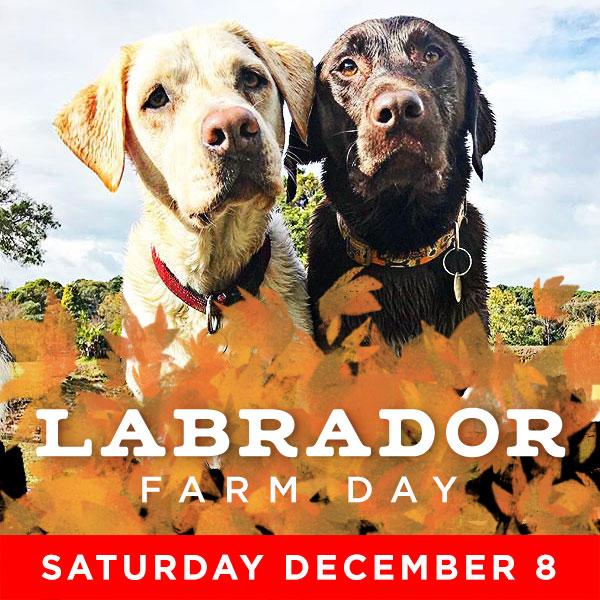 Labrador Farm Day - Dec 8